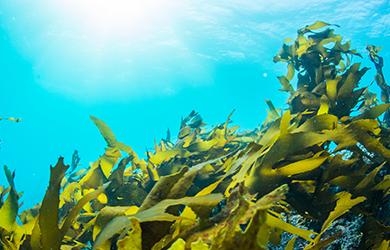 スピルリナの藻がどうやってサプリに?気になる製造方法